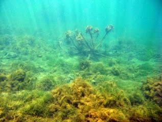 Fondos pelados por la gran influencia del río Caldarés