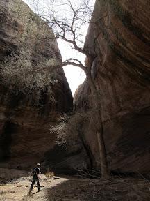 Tree in Zero G Canyon