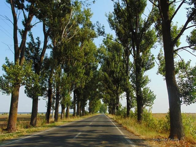 passeando - Passeando pelos Balcãs... rumo à Roménia! - Página 11 DSC02551