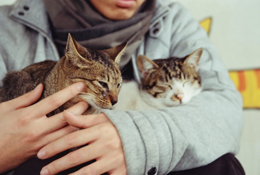 """""""人""""與貓的相遇"""