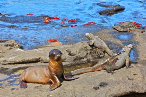 Win a 10 Day Galapagos Journey with International Expeditions. #JustOneRhino