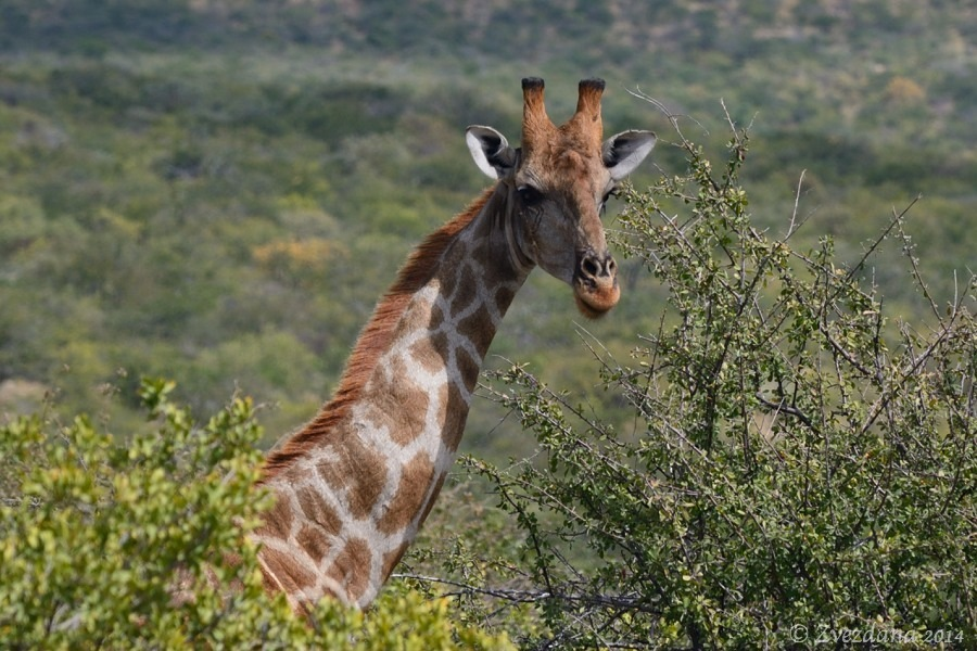 Namibia+2014_081.JPG