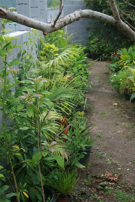 Futur jardin d'orchidées!!! IMG_3528