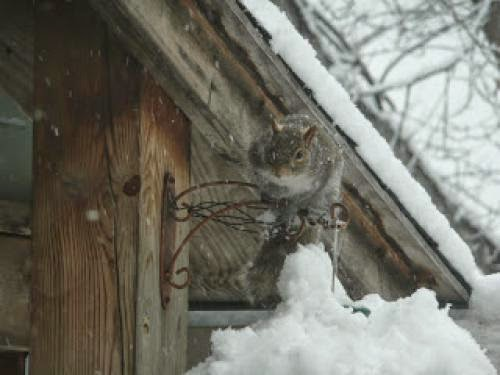 Squirrels Snow Birthdays Fairies Oz My Giveaway And A Bride Too