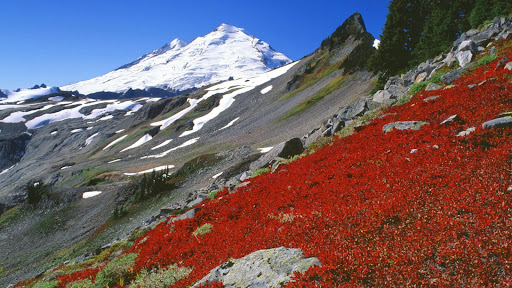 Mount Baker, North Cascades, Washington.jpg