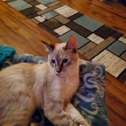 Nancy Morgan Photo 29