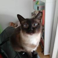 TheGermanMaxim's avatar