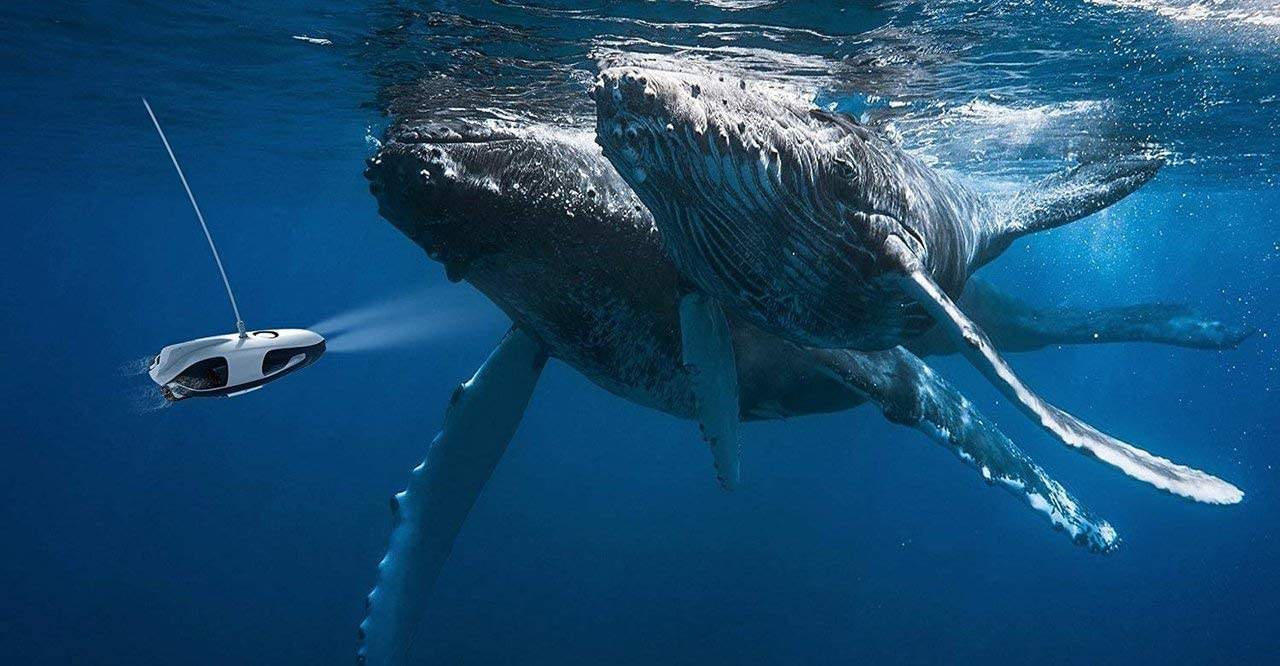 A PowerRay underwater drone approaches a pair of whales in this file photo.