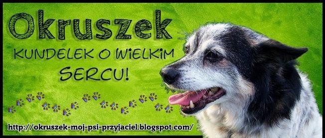 polecamy, biały jack russell terrier, banery, okruszek blog