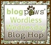 http://www.blogpaws.com/wordless-wednesday/