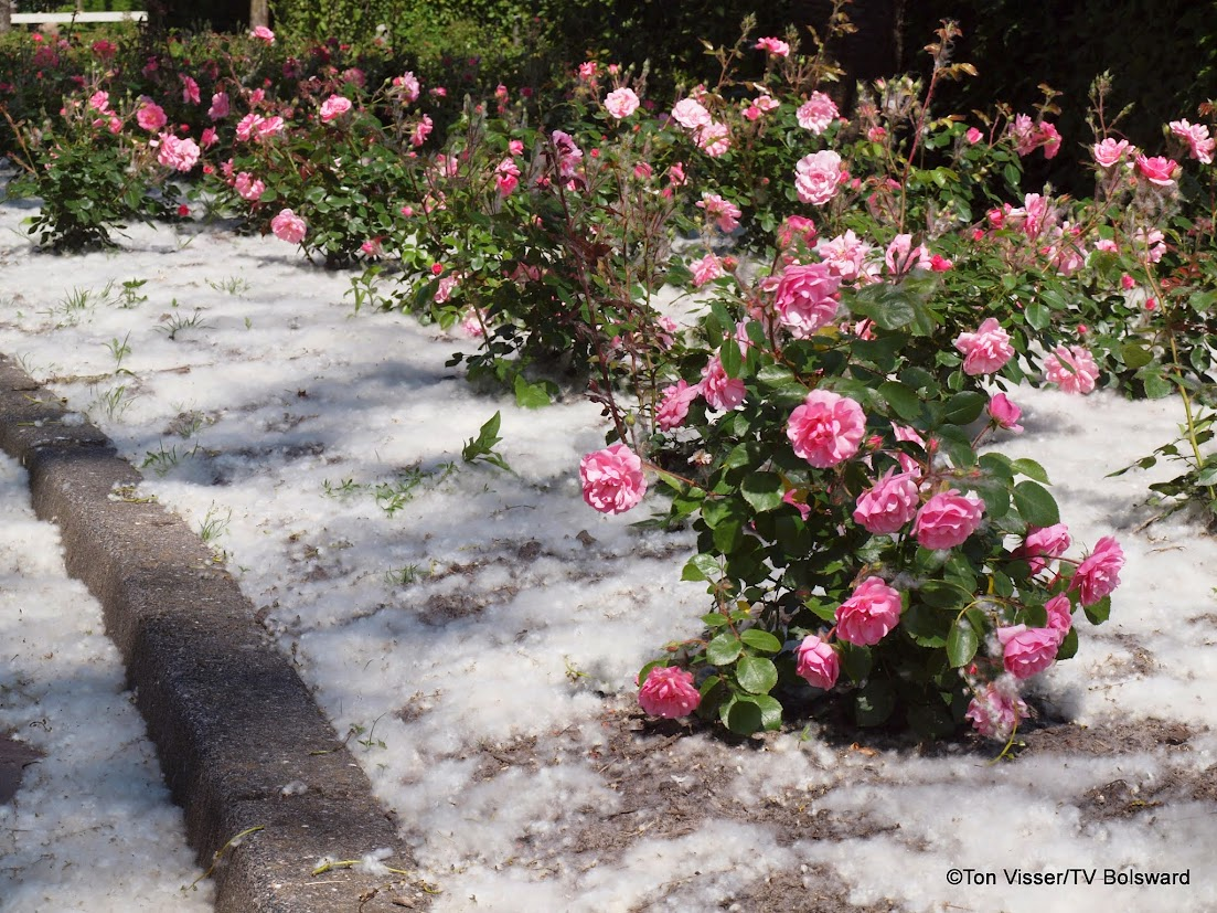 sneeuw in juli