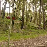 Forest near Mt Sugarloaf (324701)