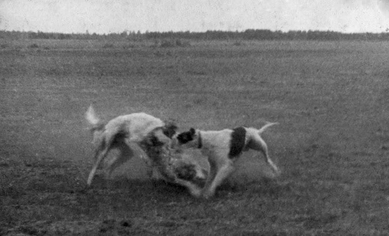 Ретро фото собак.  %25D0%2591%25D0%25B5%25D0%25B7%2520%25D0%25B8%25D0%25BC%25D0%25B5%25D0%25BD%25D0%25B8-12%25D0%25BF%25D0%25BC