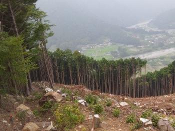 桂山林道接続点