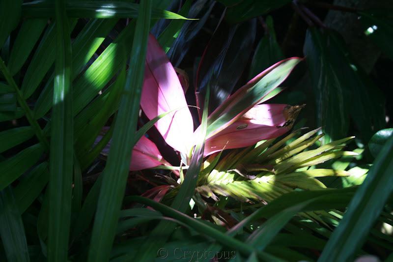 Futur jardin d'orchidées!!! - Page 2 IMG_3699