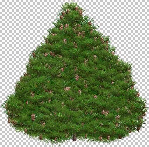 Pine_X-MasTree_2004_mm.jpg