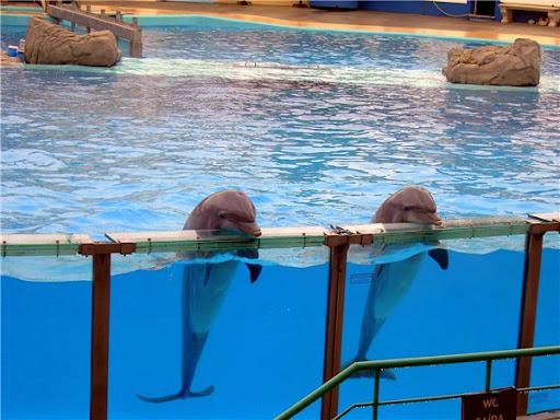 Дельфинарий в Лиссабоне поклон дельфинов фото