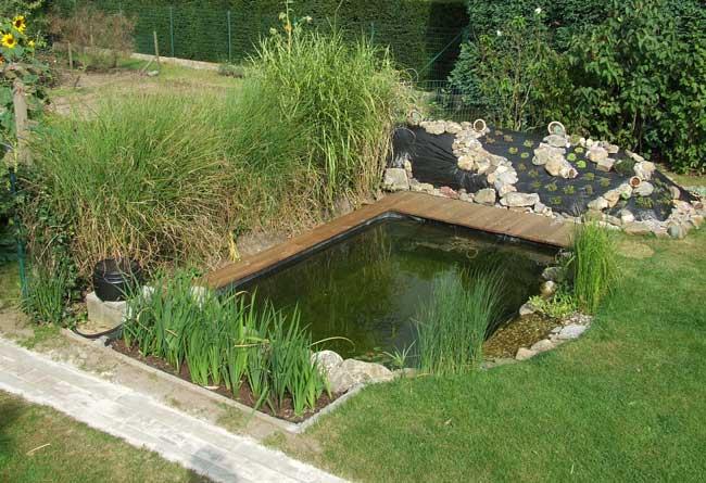 Tuinvijver maken aquarium idee for Kleine tuinvijver