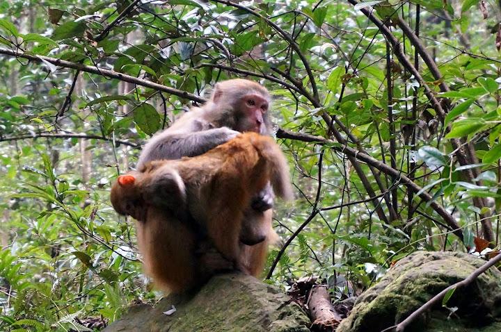 Monos NO agresivos