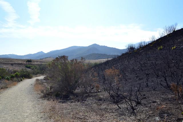 bushes reduced to burned sticks