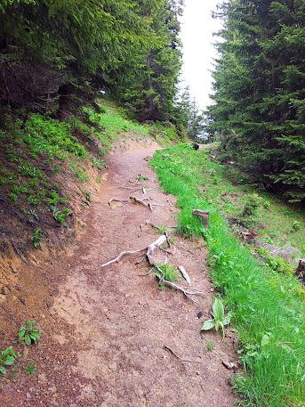 Bild vom Weg mit Baumwurzeln