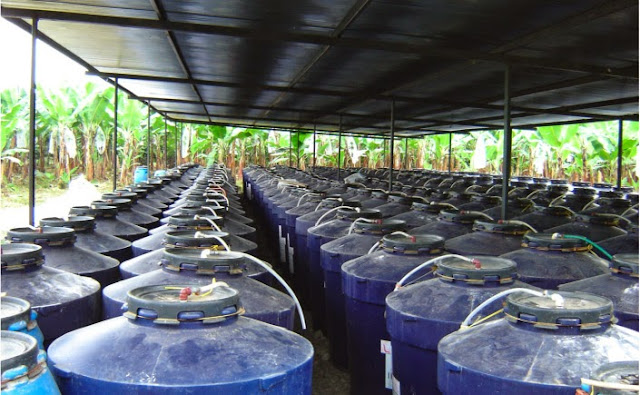 Pupuk Hayati Cair Dengan Mikroorganisme Lokal
