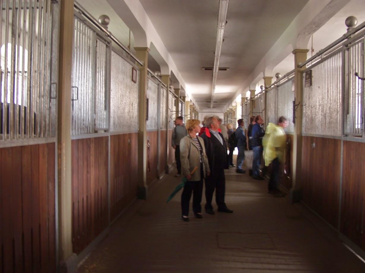 Besichtigung der Stallungen Landgestüt Moritzburg zur Hengstparade