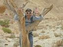 עץ יבש בנחל רחם