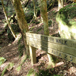 Wollombi creek Gully track (58823)