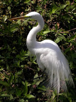 https://sites.google.com/site/justgetoutdoors/adventures/1---find-a-tour/exploring-the-florida-everglades