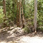 Mt Warrawolong track off Warrawolong Rd (363797)