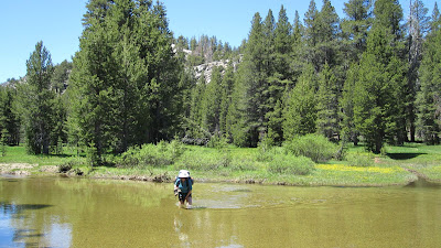 Got it. That's M, trying to keep her pants dry. Icy, icy water, but the current wasn't too bad. Note flowers in the background.©http://backpackthesierra.com