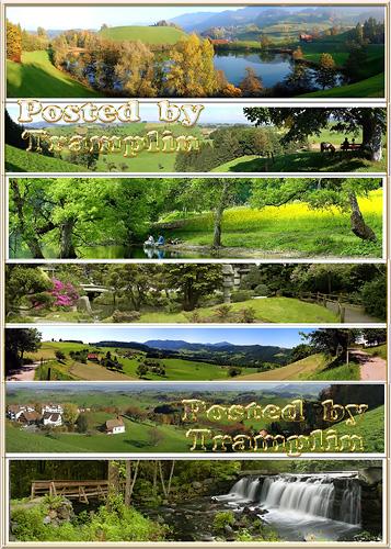 Набор панорамных фото – Леса, парки и травяное угодье. Мир зеленого цвета