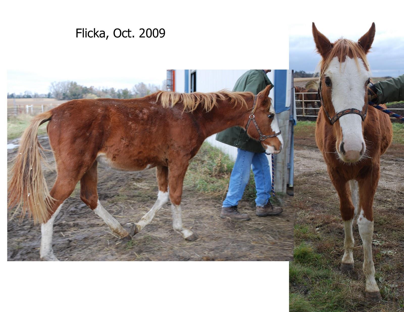 Simple   Wallpaper Horse Flicka - flickarescue  Pictures_488160.jpg