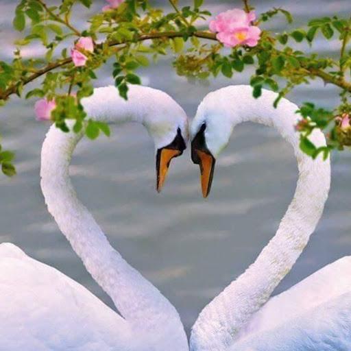 Judy Blunt