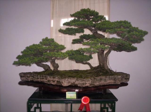 Bosques olvidados 1 - Libros sobre bonsai ...
