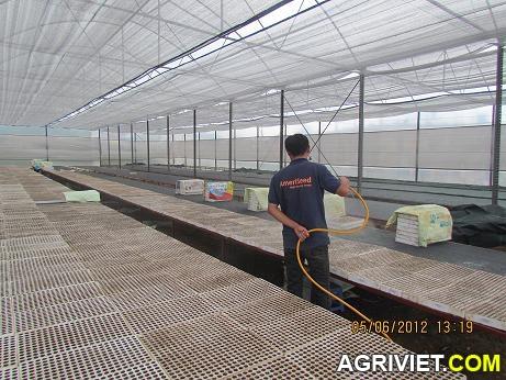 Agriviet.Com-IMG_3687.JPG