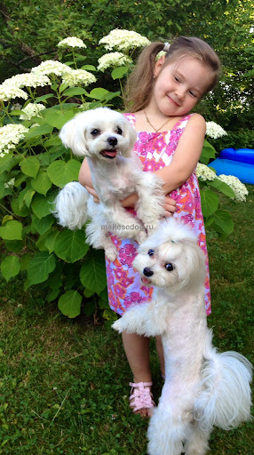 Maltese and children