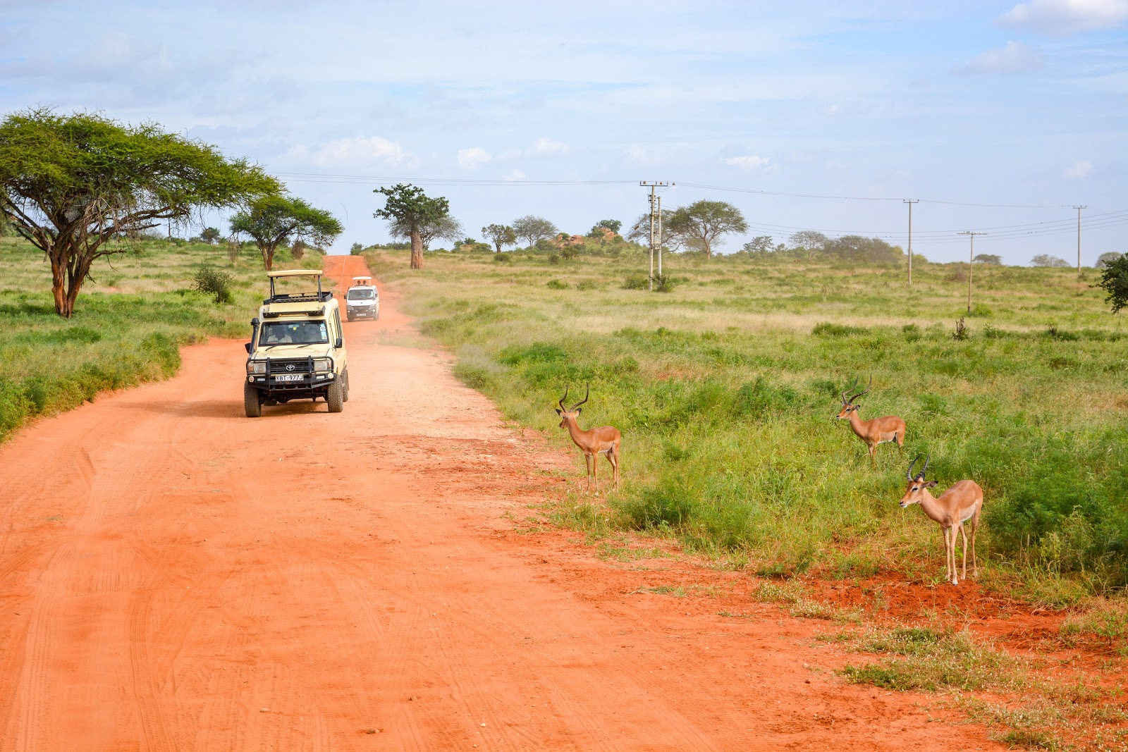 Red dirt road in African savannah with Jeep-like vehicles traveling down it and gazelle on the roadside
