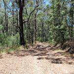Sid Pulsford Walking trail (236303)