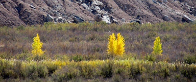 Yellow trees near the San Rafael River