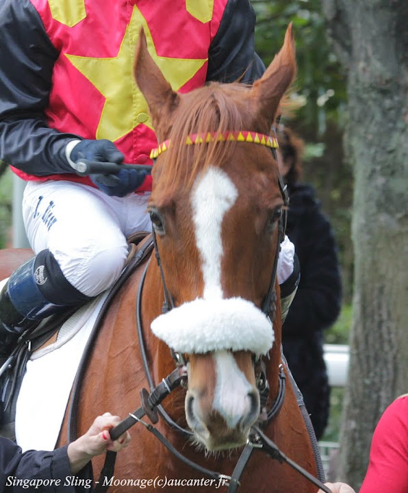 Photos Auteuil 2-11-2014 (48h de l'obstacle) IMG_5266
