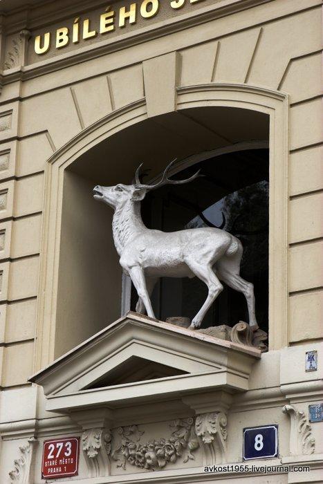 Дом У белого оленя