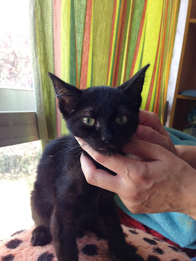 Yoko, la gata rescatada de la alcantarilla IMG_3911