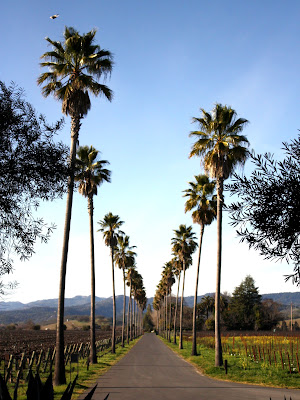 Palm Trees at a Winery in Napa Valley