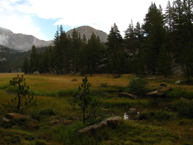 meadow along Rock Creek