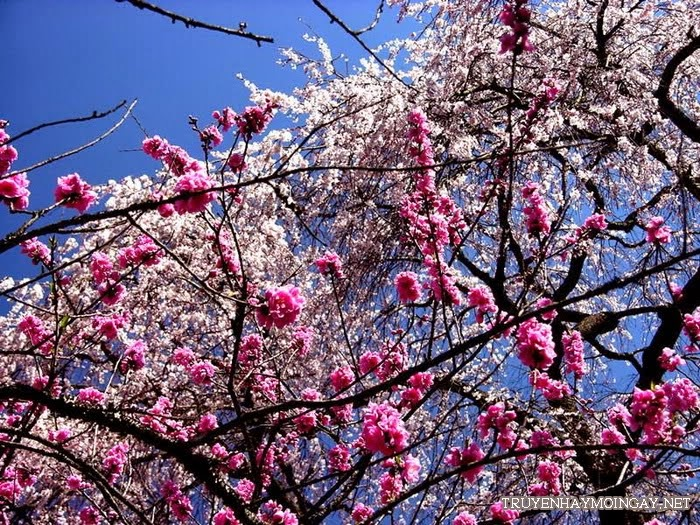 Những hình ảnh đẹp về hoa cho bạn ngắm mãi không biết chán P4