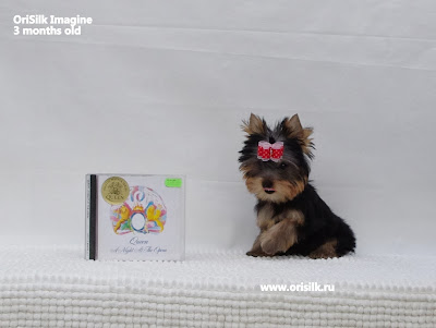 http://www.orisilk.ru/york/puppies/SateraVegasVestvud-LilitDiamantFelicita
