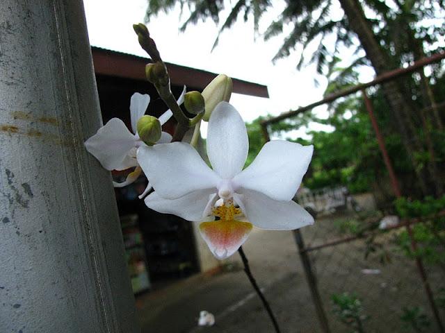 Из зимы в лето. Филиппины 2011 - Страница 4 IMG_0004%252520%2525283%252529