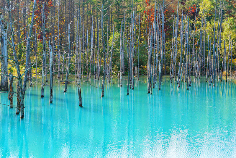 美瑛 青い池 写真5